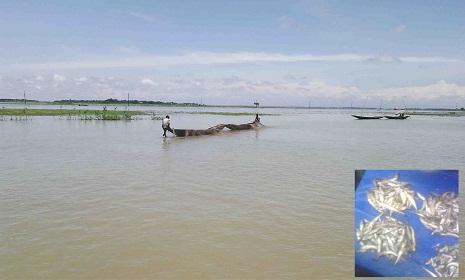 অবাধে পোনা মাছ নিধন : মদনে বড় মাছের আকাল
