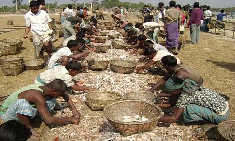 সুন্দরবনে শুটকি পল্লী থেকে মাছ আহরণের প্রস্তুতি শেষ