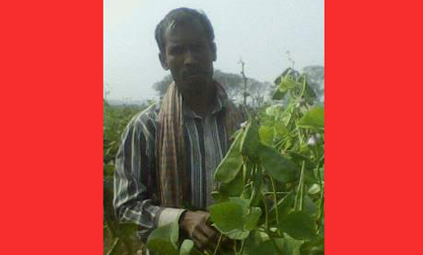 বিস্কুট শিম আবাদ করে চুয়াডাঙ্গার কৃষকরা বেজায় খুশি