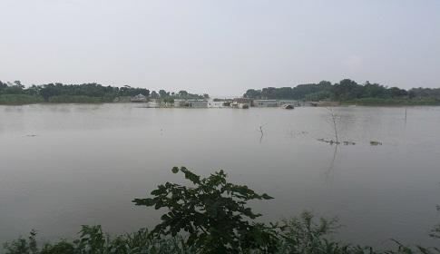 বেড়েই চলেছে পদ্মার পানি, গোয়ালন্দে পানিবন্দি ৪০ হাজার