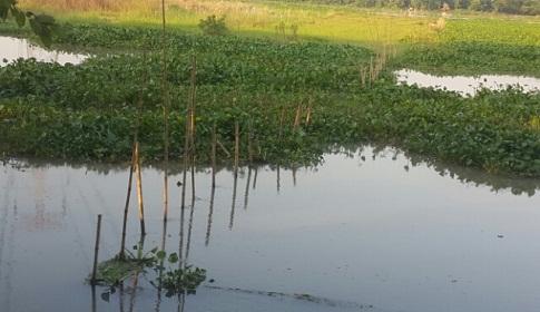 ধলেশ্বরী নদীতে অবৈধভাবে বাঁধ দিয়ে মাছ চাষ