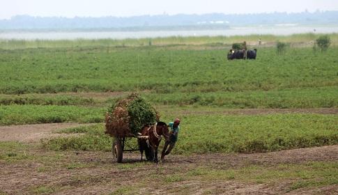 সুজানগরে বাদামের বাম্পার ফলন কৃষকের মুখে হাসি