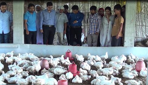 দিনাজপুরে এন্টিবায়োটিক মুক্ত নিরাপদ পোল্ট্রি মাংস উৎপাদনে সাফল্য