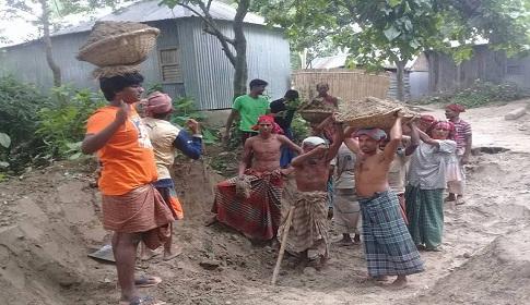 উল্লাপাড়ায় স্বেচ্ছাশ্রমে রাস্তা নির্মাণ করছেন গ্রামবাসী