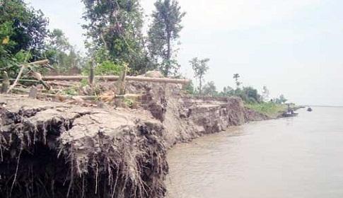 টাঙ্গাইলে যমুনার ভাঙন অব্যাহত, শতাধিক বাড়ি বিলীন