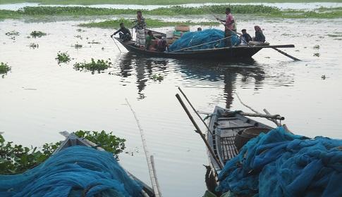 সুজানগরে গাজনার বিলে ছেঁকে মারা হচ্ছে মা ও পোনা মাছ