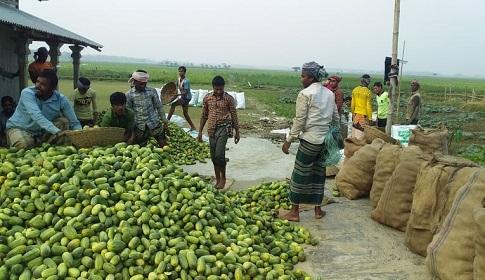 কেন্দুয়ায় খিড়ার ফলন ভালো, দাম পাচ্ছে না কৃষক