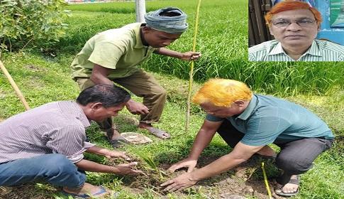 দিনাজপুরে বৃক্ষপ্রেমিক আখতার হামিদ