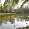 কলাপাড়ার ফাতরার বনাঞ্চলে পর্যটকদের ভিড় বাড়ছে