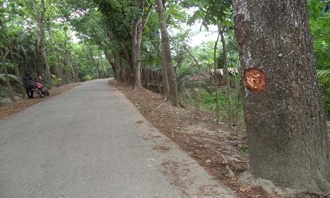 নাজিরপুরে নাম্বার তুলে বিক্রি হয়ে যাচ্ছে রাস্তার পাশের গাছ