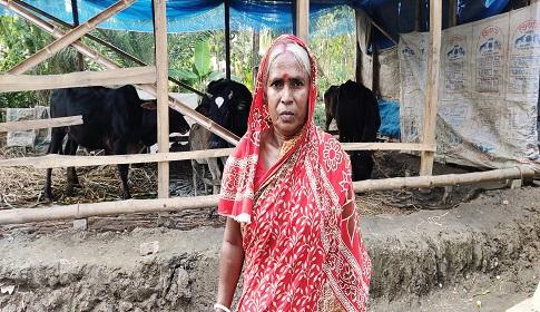 বাগেরহাটে 'আমার বাড়ি, আমার খামার' প্রকল্পে স্বাবলম্বী হচ্ছে হতদরিদ্ররা