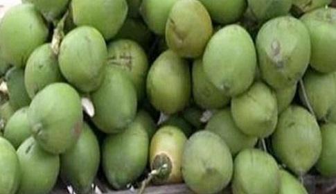 গলাচিপায় প্রচন্ড তাপদাহে গরম ডাবের বাজার