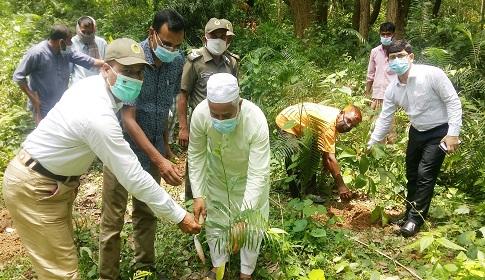 ধামইরহাটের আলতাদীঘি জাতীয় উদ্যানে রোপন করা হলো সাড়ে ২২ হাজার চারা