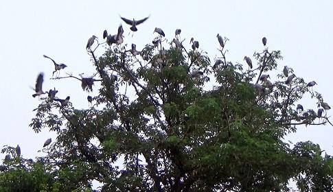 পাখির গ্রাম সর্বরামপুর ও দূর্গাপুর